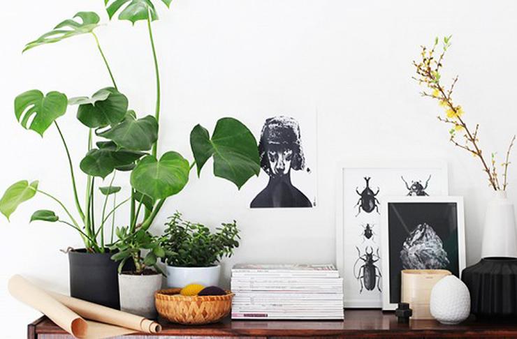 tanaman-indoor